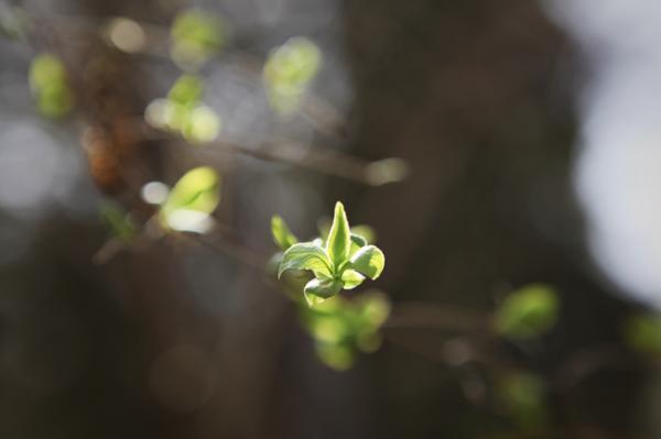 """全国树叶变绿进程图来了!今年春来早 绿叶提前""""报到"""""""